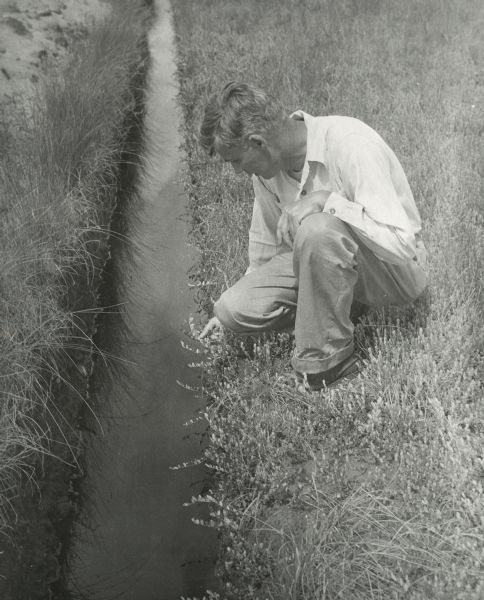 Farmer examining cranberry plant near an irrigation ditch.