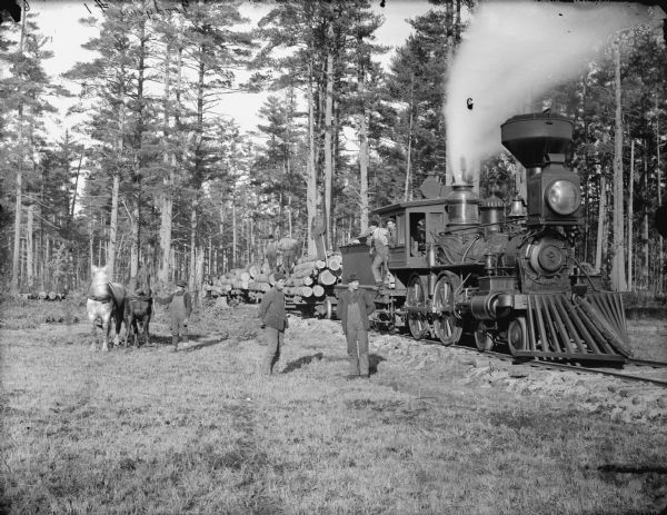 Train pulling a long load of logs through the woods. Horses replaced oxen teams and are used along with wood burning trains to haul logs.