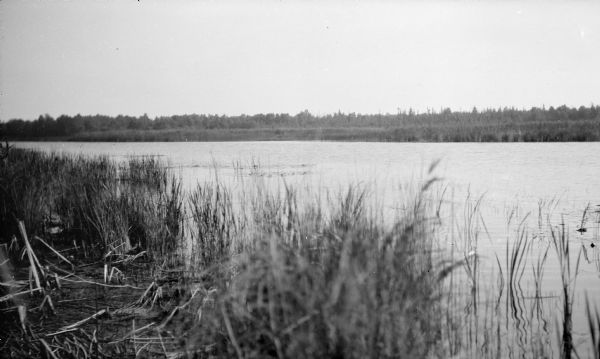 A view of the Mink River estuary with marsh grasses in the foreground.