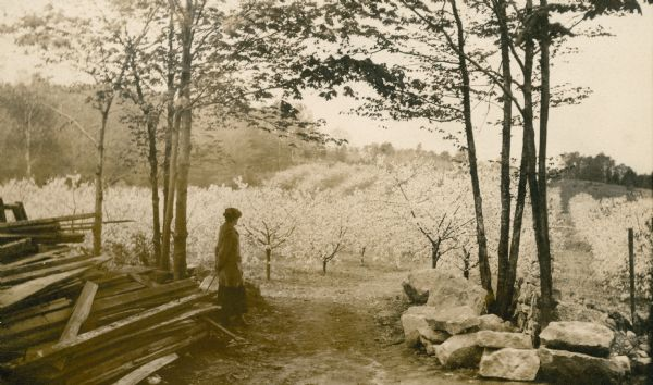 The photographer's wife Clothilde admires the view of the Gibraltar Orchard in full bloom. The is a pile of lumber on the left; stones are piled under trees on the right.