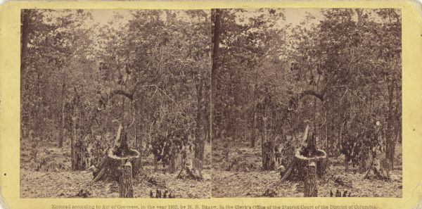 "Stereograph of Gettysburg battlefield showing trees and a stump. Handwritten on reverse, ""On the right of our line."" This is probably a reference to the terrain on Culp's Hill where the 2nd, 6th, and 7th Wisconsin regiments were positioned on July 2nd and 3rd after experiencing hard combat and severe losses on July 1st. Of the three regiments, only the 6th Wisconsin commanded by Lt. Colonel Rufus Dawes experienced combat on Culp's Hill."