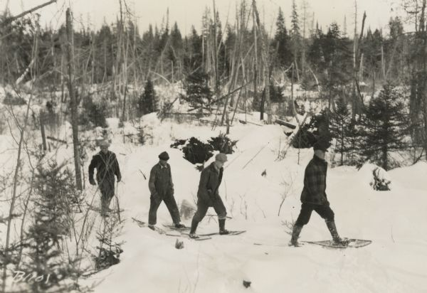 Winter scene with four men walking on snowshoes through a forest.
