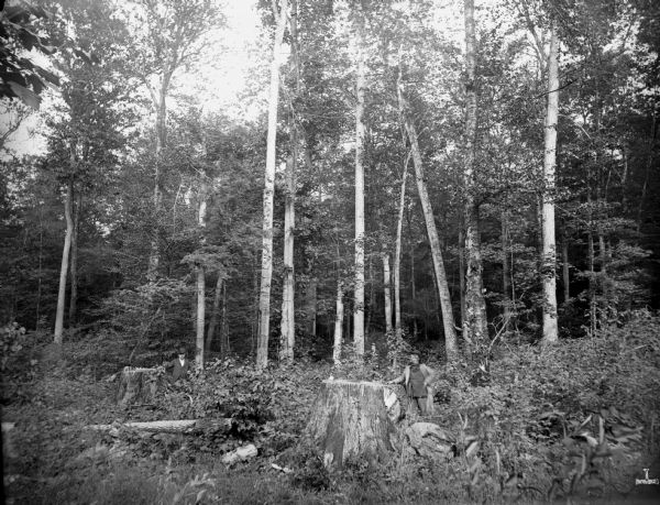 A hardwood forest ten miles southwest of Florence, containing hard maple, birch, elm, oak, hemlock, and other types of timber. Two men are leaning against stumps, and two other men stand among the trees in the background.