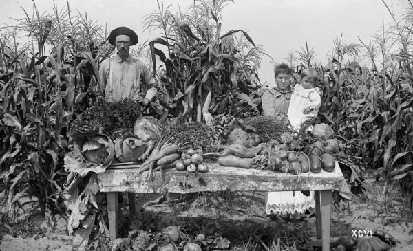 Matthew H. Stephenson, his wife Julia Hebert Stephenson, and their son William Clinton posing with produce samples from the Menomonee River Boom Company garden near Marinette. Produce grown included sweet corn, cabbage, carrots, rutabagas, squash, onions, and cucumbers.