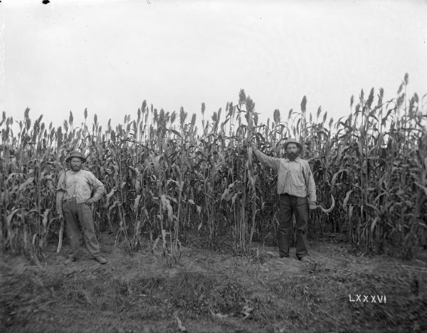 Two men with scythes stand in front of a sorghum patch planted on May 20th, 1895. The view was taken near Osceola.