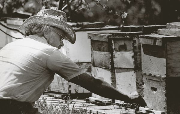William Meyer, owner of the Kickapoo Orchard at Gays Mills, adds pollen to beehives to help in pollination.