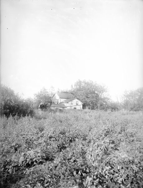 View across thick covering of foliage towards the Turvill family home and garden. The Turvill home is in the background surrounded by trees.