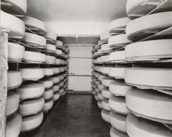 Wheels of cheese stacked for curing at a cheese factory.