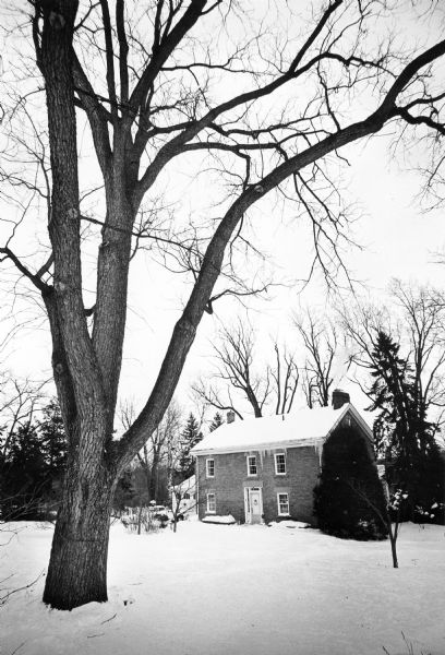 A large black walnut tree standing in the yard of the Spring Tavern at 3706 Nakoma Road. Also known as the Spring Inn or Spring Hotel, the structure was built of bricks made on site by Charles Morgan in 1854.