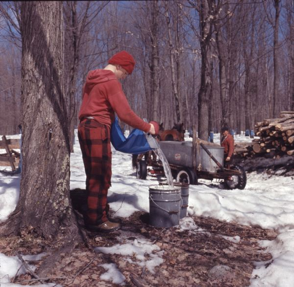 A youth, dressed in red hat and sweatshirt, plaid pants, and brown work boots, is pouring maple sap from a bag into a metal bucket. In the background a man is standing behind a horse-drawn wagon. On the wagon is a large, metal trough. Sap bags are on trees in the background. Snow is on the ground.