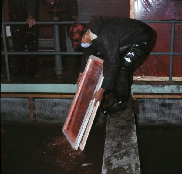 A man is bending over and standing on a flat metal rail over a vat of water. The man is wearing a dust mask over his face, and is holding two screens dyed red. Two other men are standing behind a railing in the background.