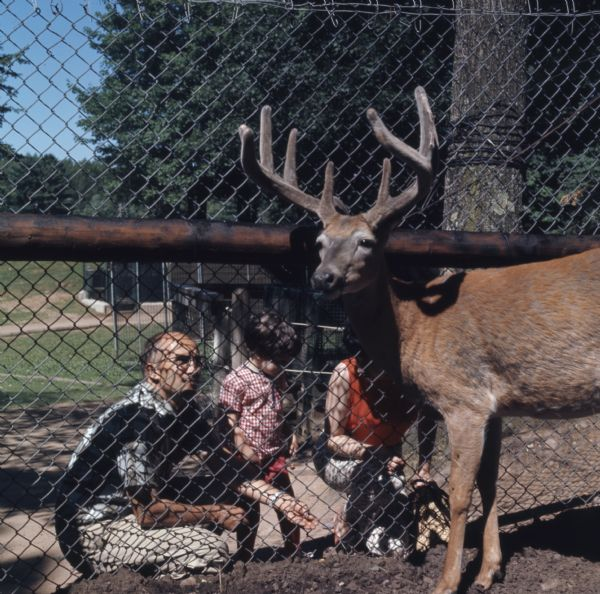 View from inside fenced enclosure of a buck standing near a fence. On the other side of the fence a man and woman are kneeling on the ground next to a young girl. The man is holding out food for the buck.