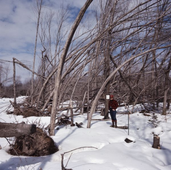 "View across snow-covered ground towards a man standing on a log. The trees around him are either broken or bent over towards the right, the result of a storm. A sign on a tree behind the man reads: ""1."""