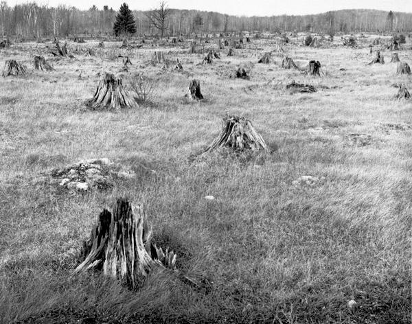 Grass meadow with rotting tree stumps, possibly after a fire.