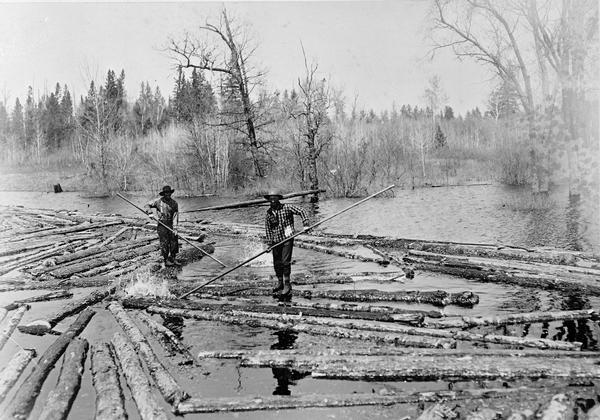 Log pond with two lumberjacks walking on the floating logs and sorting them in the Peshtigo River area.
