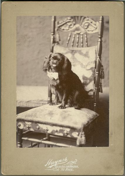 "Portrait of ""Puck,"" a King Charles Spaniel.  According to family tradition, he was Virginia Dousman's pet."