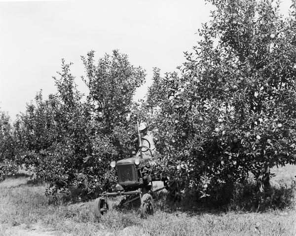 Man driving an IHC Farmall Cub with mower in Joe Spence's apple orchard.