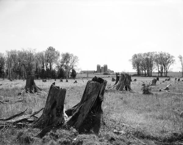 Burned cedar stumps in a swamp with a farm in the distance.