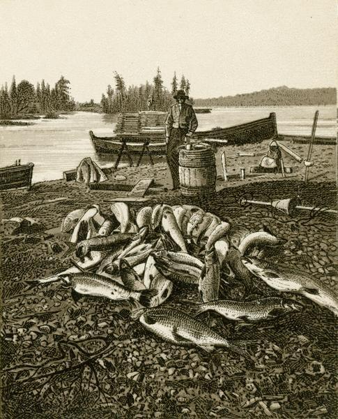 Two tone lithograph of a pile of Lake Superior whitefish and trout on the lakeshore with a man and boat in the background.