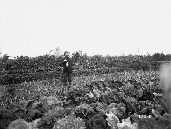 A farmer stands in his vegetable field.