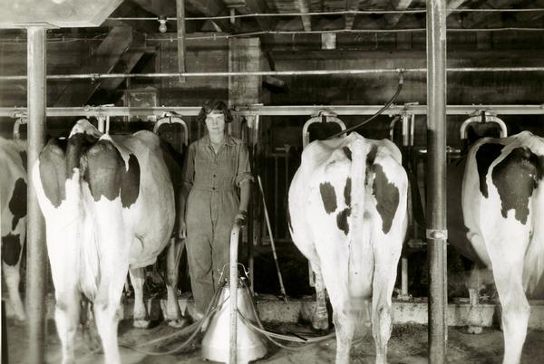 A woman runs the milking operation at the G.L. Hamon dairy farm.