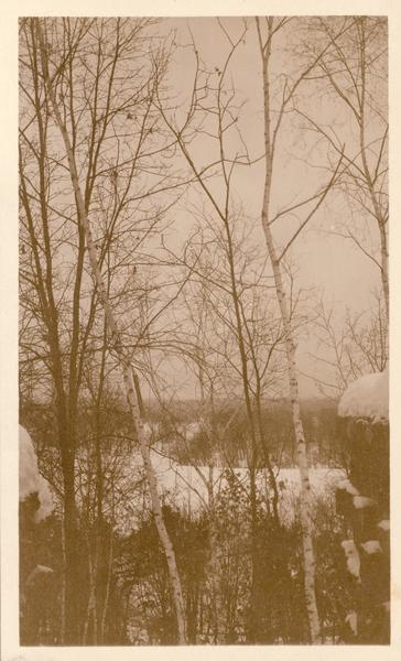 Winter scene with birch trees in the snow near Taliesin, the home of Frank Lloyd Wright.
