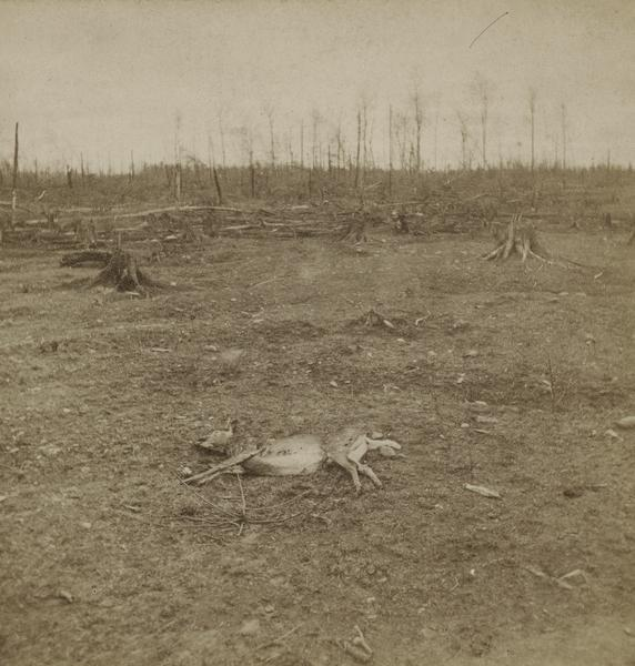 Aftermath of Peshtigo fire on October 8, 1871. Devastated landscape with deer carcass in foreground. The Peshtigo fire razed the small town of approximately 2000 people. More than 1,200 people perished in the conflagration that consumed more than 1.25 million acres of forest in what was, at the time, a booming lumber town.