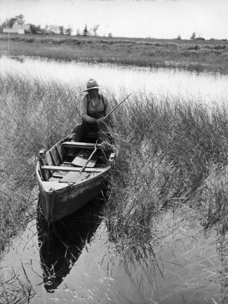 Joe Stoddard of the Chippewa tribe harvesting wild rice on the Bad River Indian Reservation.