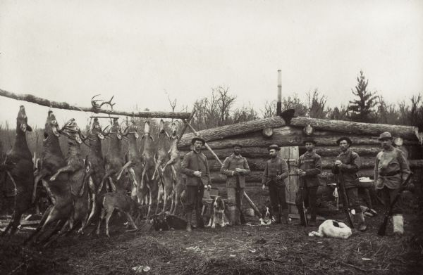 Deer hunters' camp in Northern Wisconsin. Image includes six hunters and their dogs posed in front of their cabin with hanging deer carcasses.