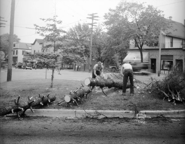 Two men sawing up the 10th ward Christmas tree, a stately Wisconsin fir, which had been growing at the corner of Spooner and Monroe Street.