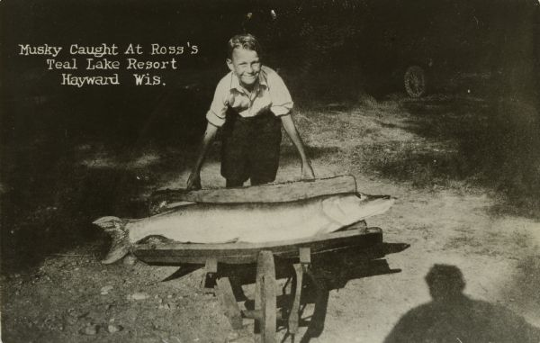 Nelson Ross posing with muskellunge caught by Claude Baudy at Ross' Teal Lake Lodge. Fish was caught using a goldfish for bait.