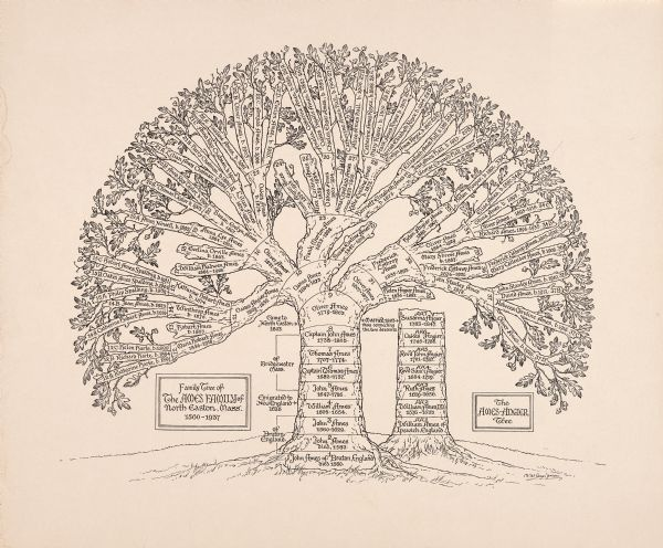 Drawing of Ames-Angier family tree of North Easton, Massachusetts, 1560-1937.