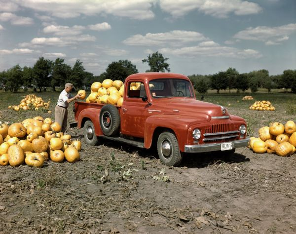 Color photograph of a farmer filling a red International Harvester L-120 truck with pumpkins.