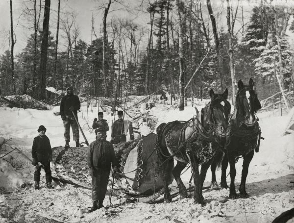 Winter scene with lumber workers hauling a large log with horses.
