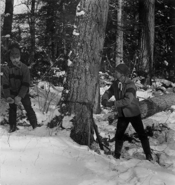 Sigvart Solbrg, (left) and Anton Follstad, (right) sawing a tree down during winter.