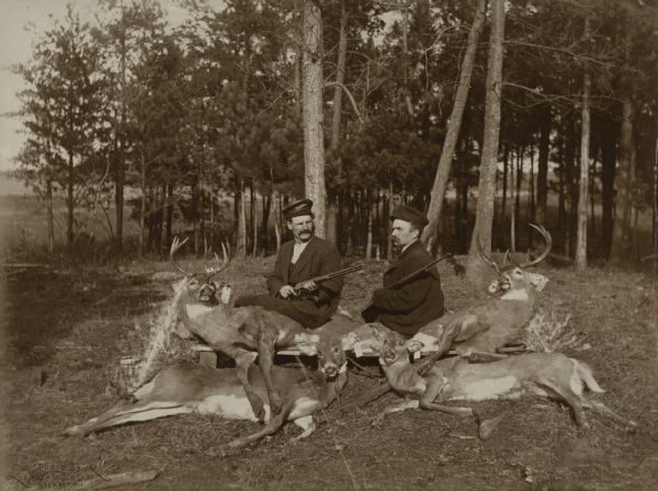 Two deer hunters are sitting on a low bench with their rifles and four killed deer. The deer have tags on their ears.